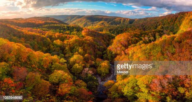 the beautiful scenery of autumn foliage in aomori, tohoku region, japan - 紅葉 ストックフォトと画像