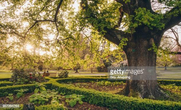 the beautiful scenery of christchurch's botanic gardens at sunset. - christchurch nieuw zeeland stockfoto's en -beelden