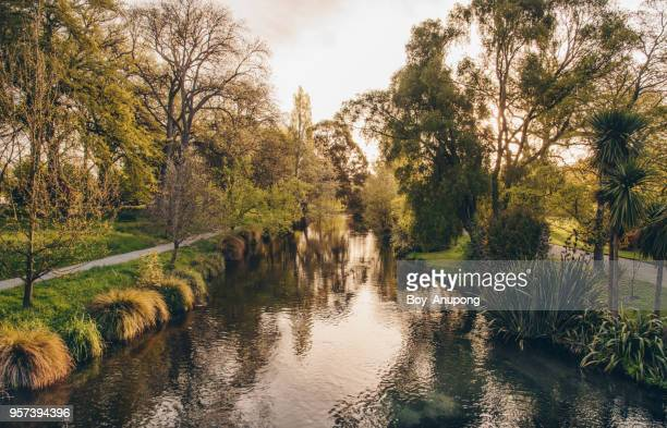 the beautiful scenery of christchurch's botanic gardens & avon river at sunset. - christchurch new zealand stock pictures, royalty-free photos & images
