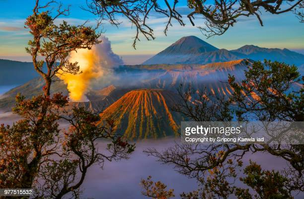 The beautiful sunrise scene of the volcanoes at the Bromo Tengger Semeru National Park with the branches of trees, East Java, Indonesia.