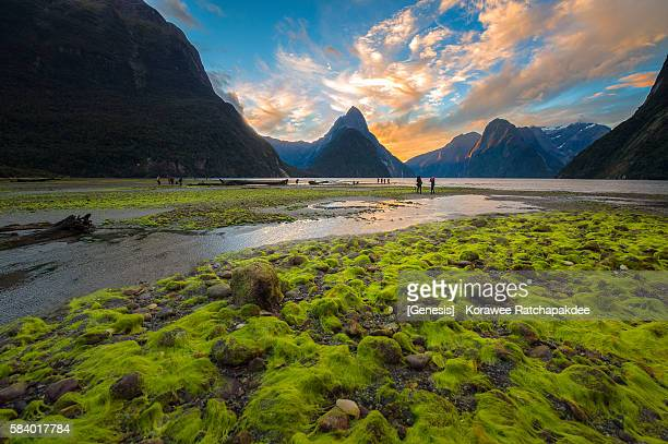 The beautiful sunset sky at Milford Sound with the tourist