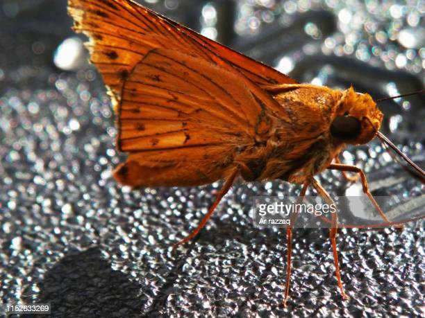 The beauty of animals Butterfly butter alighted beautifully