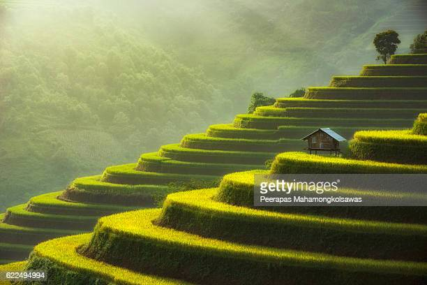 the beauty of morning light from mu cang chai,vietnam - terraced field stock pictures, royalty-free photos & images