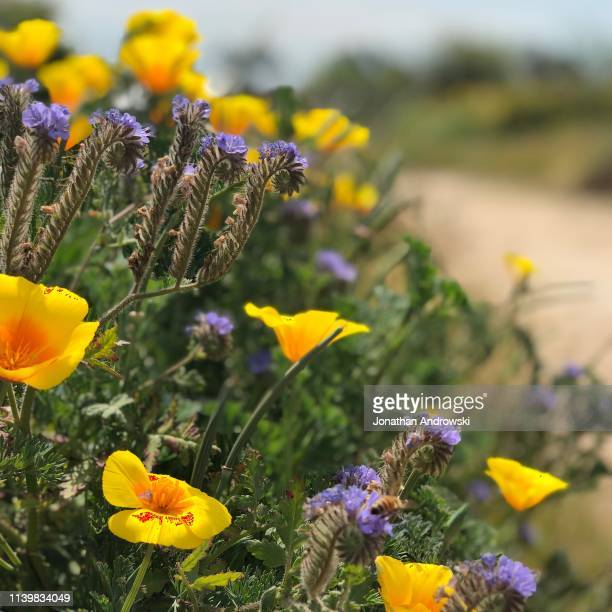 the beauty of nature - torrance stock pictures, royalty-free photos & images