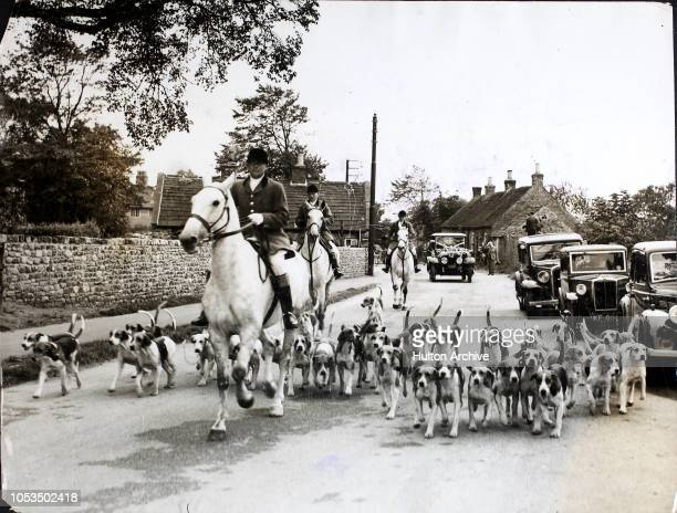 The Bedale Hounds led by three Hunt servants in pink coats mounted on grey horses precede the wedding cars to a reception in BoltononSwale Yorkshire...