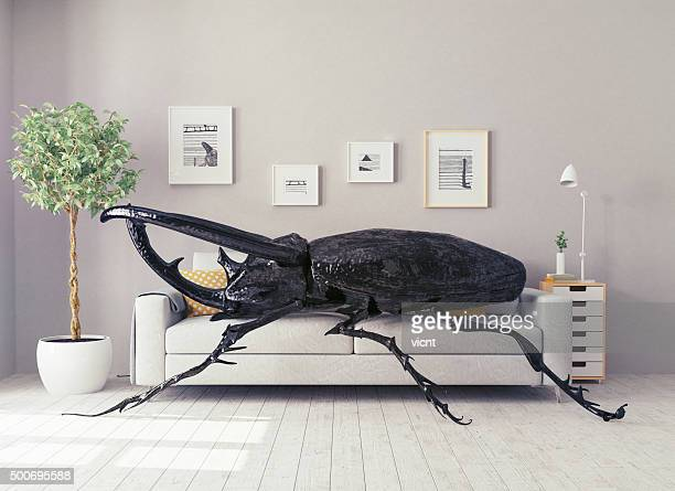 the beetle in the  room