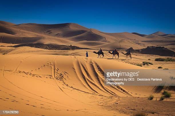 The beginning of the Sahara desert