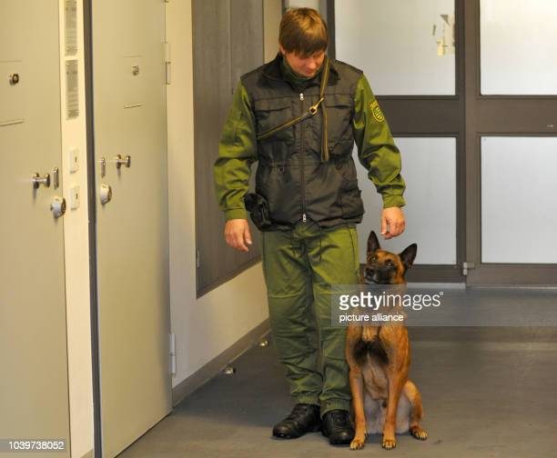 The Belgian shepherd dog 'Artus Lübeck Airport', pictured together with his guide Jörg Siebert is going to be the first cellphone detection dog in...