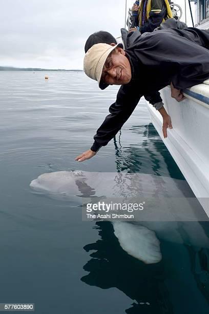 The beluga and fisherman Yoichi Ishigaki are seen on July 16, 2016 in Abashiri, Hokkaido, Japan. A fisherman, Yoichi Ishigaki, battling cancer has...