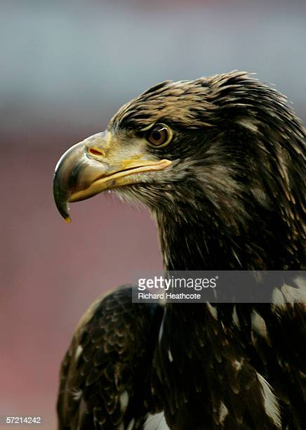 The Benfica Golden Eagle casts an eye over proceedings before the UEFA Champions League Quarter Final first leg match between Benfica and Barcelona...