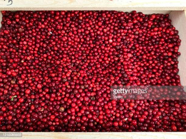 the berries at torvehallerne, copenhagen, denmark - vsojoy stock pictures, royalty-free photos & images