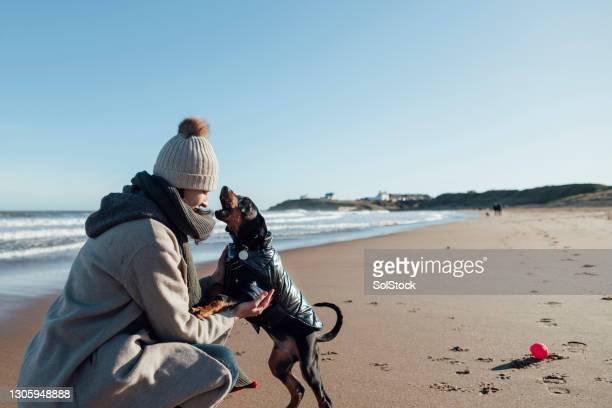 the best friendship - pet clothing stock pictures, royalty-free photos & images