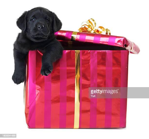 Il miglior regalo che si possa mai ricevere