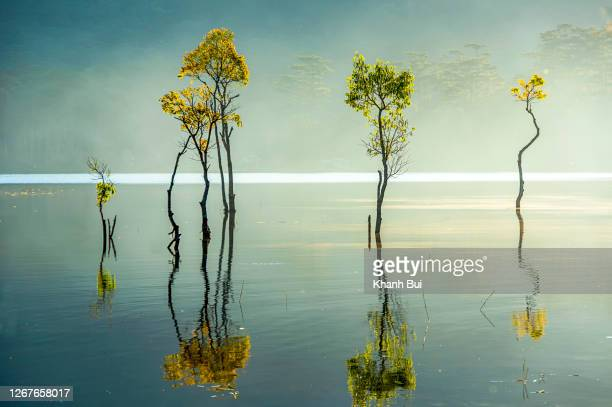 the best moments of summer with flooded trees and magic light reflection on the fog lake at sunrise - printing out stock pictures, royalty-free photos & images