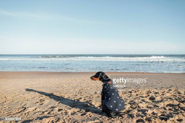 the best place to be - pet clothing stock pictures, royalty-free photos & images