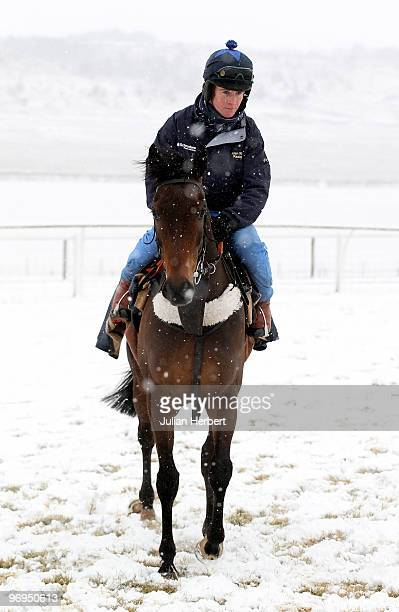 The Betchworth Kid at an open day day at his trainer Alan Kings Barbury Castle Stables prior to The Cheltenham National Hunt Festival due to take...
