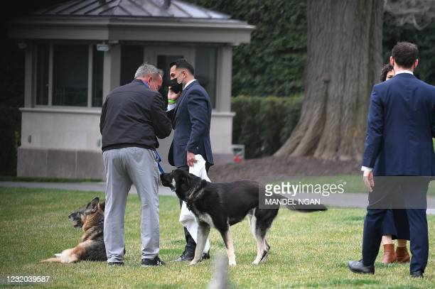 The Bidens dogs Champ and Major are seen with aides on the South Lawn of the White House in Washington, DC, on March 31, 2021. - First dogs Champ and...