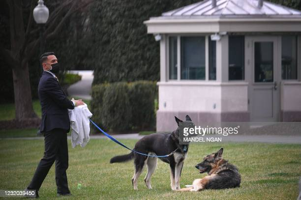 The Bidens dogs Champ and Major are seen with an aide on the South Lawn of the White House in Washington, DC, on March 31, 2021. - First dogs Champ...