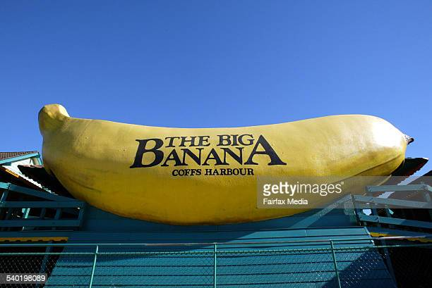 The big banana plantation at coffs harbour on the central coast of nsw