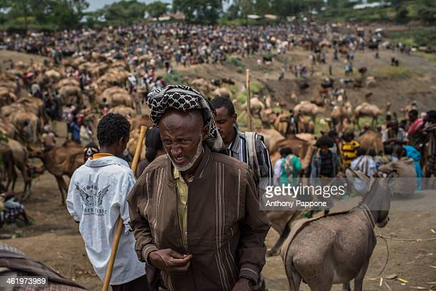The big cattle market in bati, come from all the villages order to sell their animals, bulls, camels, sheep. Ethiopia