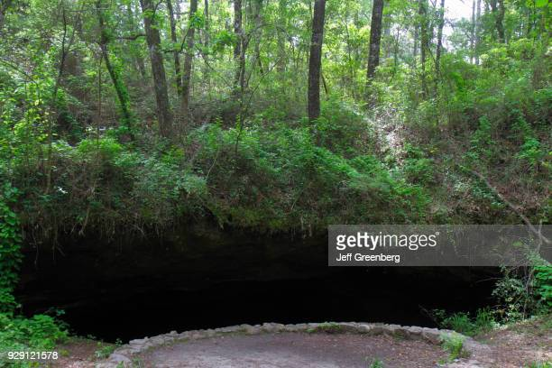 The Big Dismal Sink in the Apalachicola National Forest