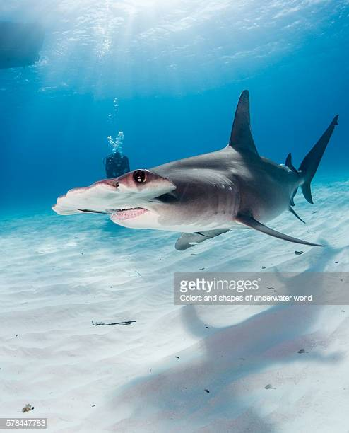 the big one - south bimini stock photos and pictures