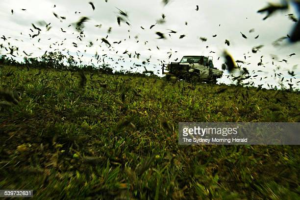 The Big Picture Plague locusts on a farm near Wee Waa Locusts can form swarms covering up to 25 square kilometres and travel 500 kilometres a day in...
