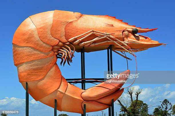 the big prawn, ballina, australia - large stock pictures, royalty-free photos & images