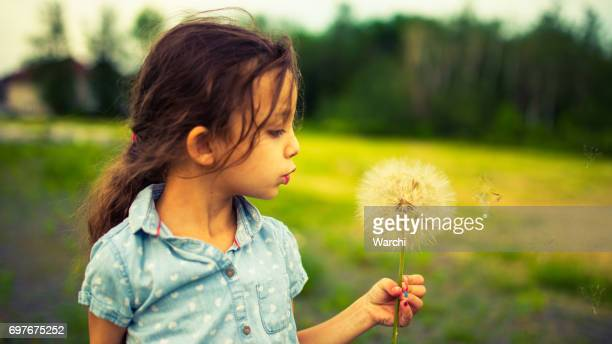 the biggest dandelion in the world - may stock pictures, royalty-free photos & images