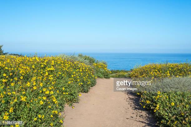 the biodiversity trail at the scripps coastal reserve. - la jolla stock pictures, royalty-free photos & images