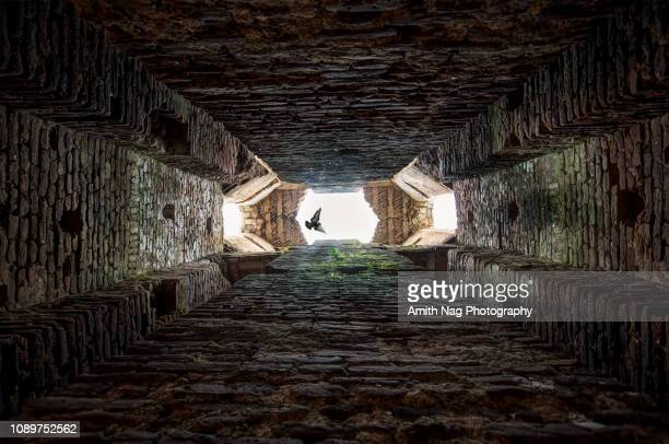 the bird in the ruined bell tower - oude ruïne stockfoto's en -beelden