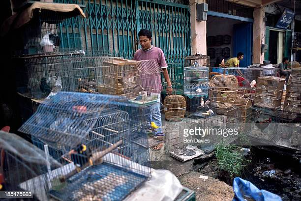The bird market on Jalan Bintang Indonesia is a major supplier of rare birds as well as other wildlife species like pangolins and leopard cats sold...