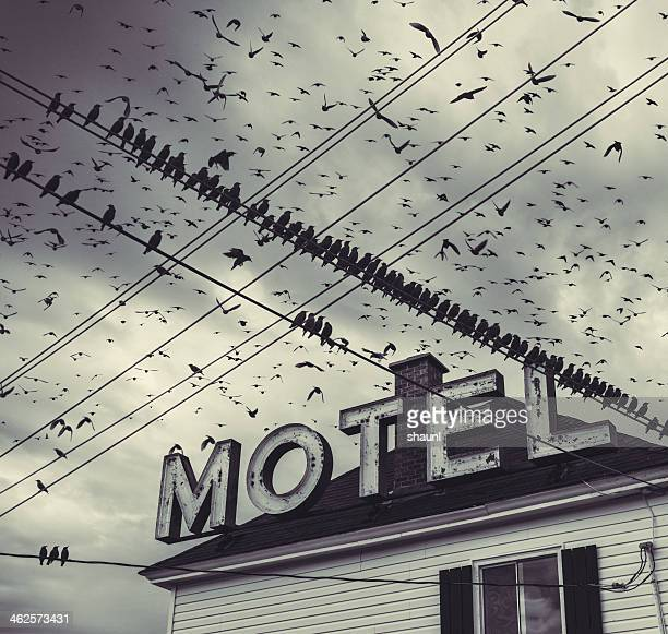 The Bird Motel