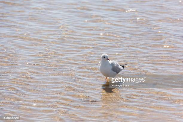 The bird stands on the water