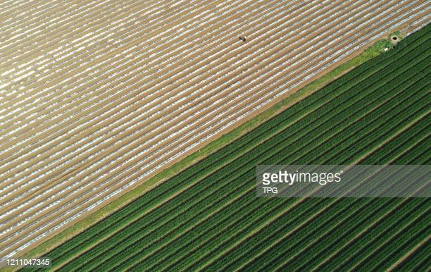 The bird view of green field with plastic film mulch on 26th April 2020 in PingdingshaHenanChina