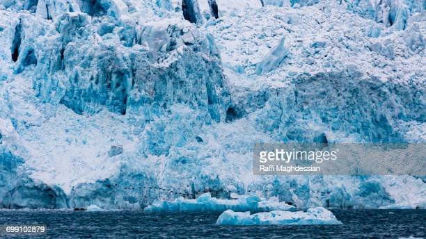 the birds and the glacier, spitzbergen, svalbard - pack ice stock pictures, royalty-free photos & images