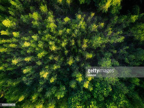 the bird's eye view to the tropical rain forest, north of thailand - weelderige plantengroei stockfoto's en -beelden