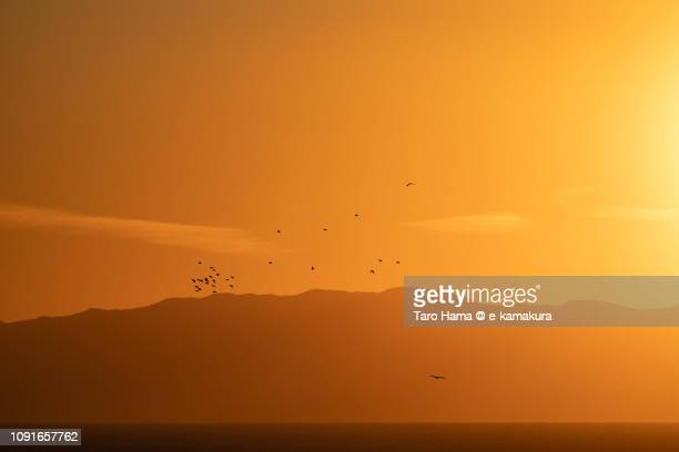 The birds flying on Izu Peninsula and Pacific Ocean in Japan