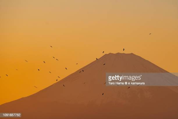 The birds flying on Mt. Fuji in Japan
