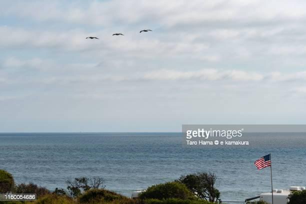 The birds flying on the beach in California