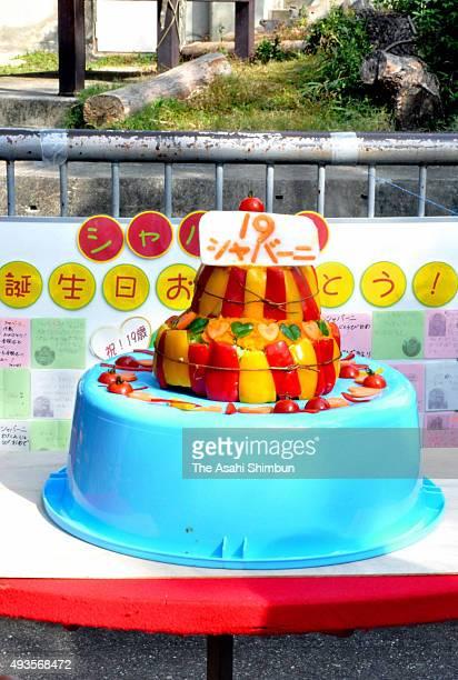 The birthday cake for Western lowland gorilla Shabani is seen during his 19th birthday at Higashiyama Zoo on October 20 2015 in Nagoya Aichi Japan