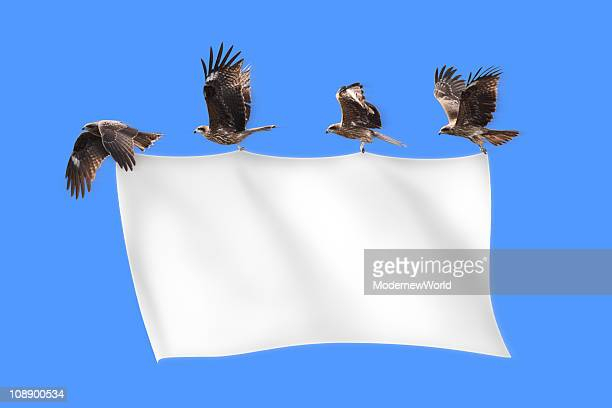 The black kites pulling blank banner