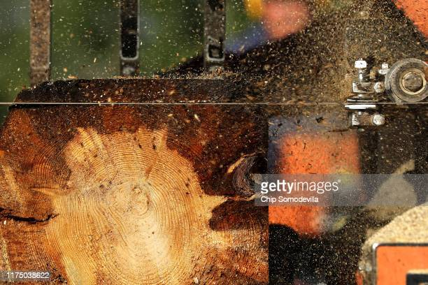 The blade of Dallis Hunter's LT70 Hydraulic Portable Sawmill cuts through a ponderosa pine log with obvious signs of blue stain fungus in its sapwood...