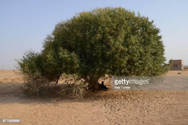 The Blessed Tree of The Prophet Mohammed, Mafraq, Jordan.