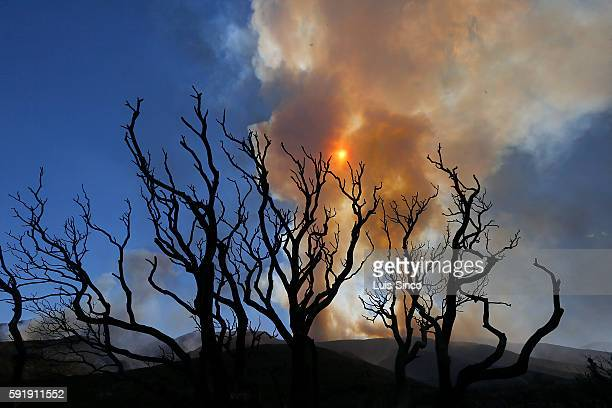 The Blue Cut fire burns in the mountains of the San Bernardino National Forest leaving charred vegetation in its wake near Wrightwood on Thursday Aug...