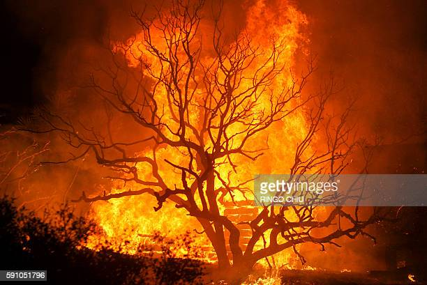 The Blue Cut wildfire burns housings and trees near Cajon Pass north of San Bernardino California on August 16 2016 A rapidly spreading fire raging...