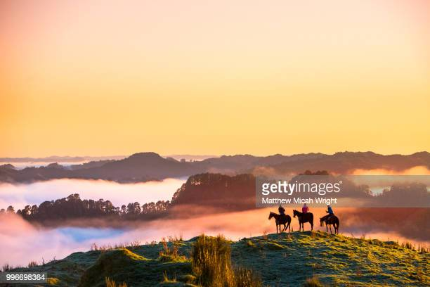 the blue duck lodge located in the whanganui national park is a working cattle farm with a focus on conservation. the early morning fog floods the valley at sunrise. a group of horse trekkers ride to the summit to catch the sunrise. - tranquil scene stock pictures, royalty-free photos & images