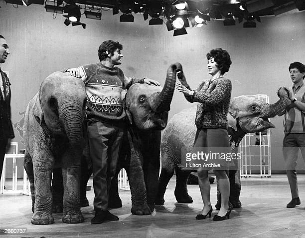The Blue Peter team Peter Purves Valerie Singleton and John Noakes with Indian elephants 'Dum Dum' 'Sarah' and 'Emma'