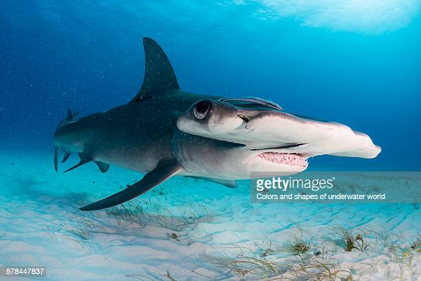 the blue - south bimini stock photos and pictures