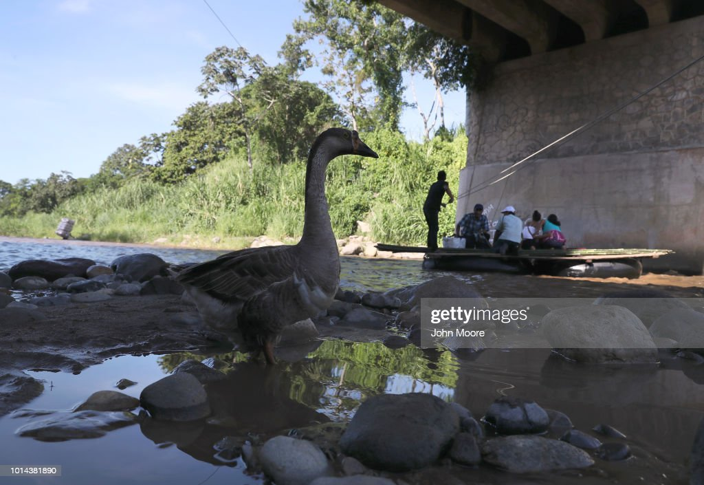 The boatmen's mascot goose Pepa watches as people are rafted across the Suchiate River from Guatemala into Mexico on August 9, 2018 in Carmen, Guatemala. The illegal crossing point is located under the international bridge connecting the two countries, circumventing immigration and customs checkpoints.